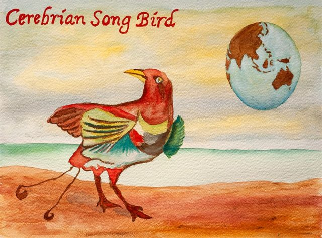 cerebrian song bird