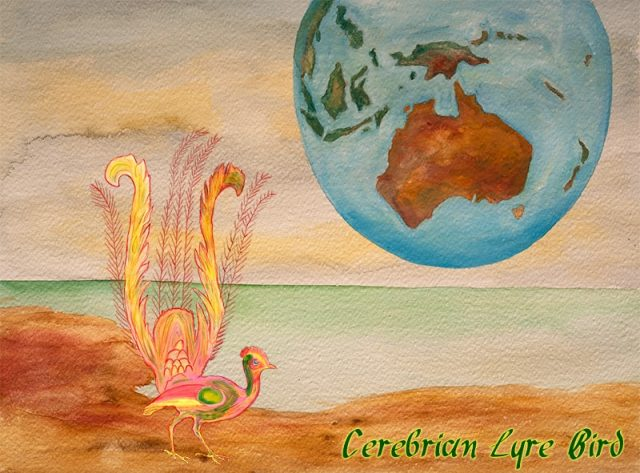 cerebrian lyre bird