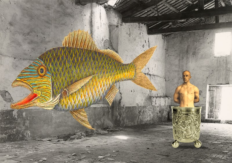 fishes of cerebria no. 7